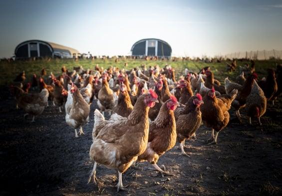 PRESSEMEDDELELSE: Småskalapakke giver håb for små fødevarevirksomheder