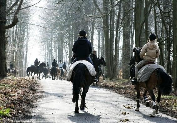 PRESSEMEDDELELSE: Støtte til ny hesteportal i Guldborgsund