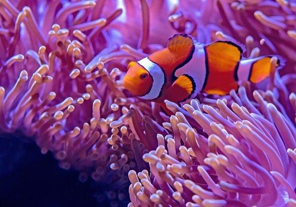 PRESSEMEDDELELSE: Akvarier skal være unikke og større end nogensinde før