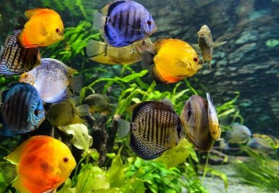 PRESSEMEDDELELSE - Akvarier skal være unikke og større end nogensinde før