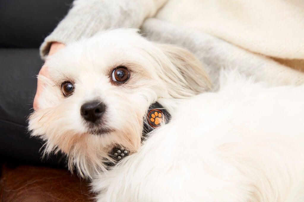 PRESSEMEDDELELSE - Nyt smartwatch til hunde øger livskvaliteten for både kæledyr og ejer