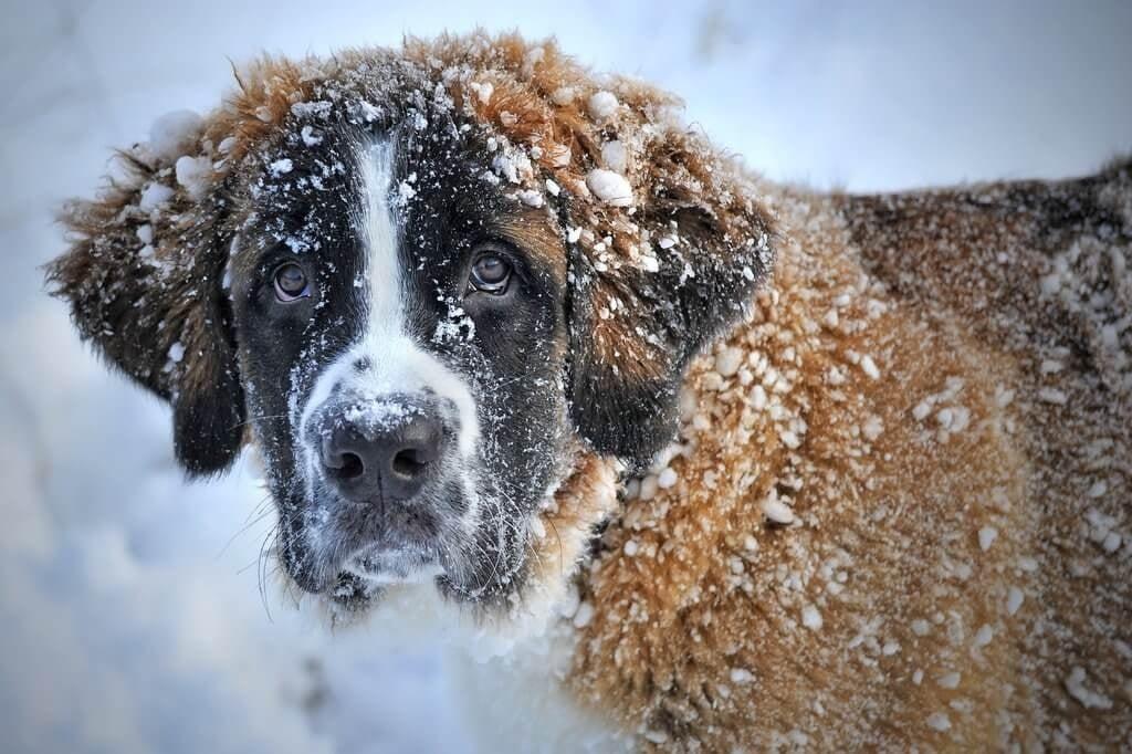 PRESSEMEDDELELSE - Kolde morgener venter i februar, hjælp hunden godt gennem vinteren
