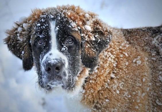 PRESSEMEDDELELSE: Kolde morgener venter i februar – hjælp hunden godt gennem vinteren
