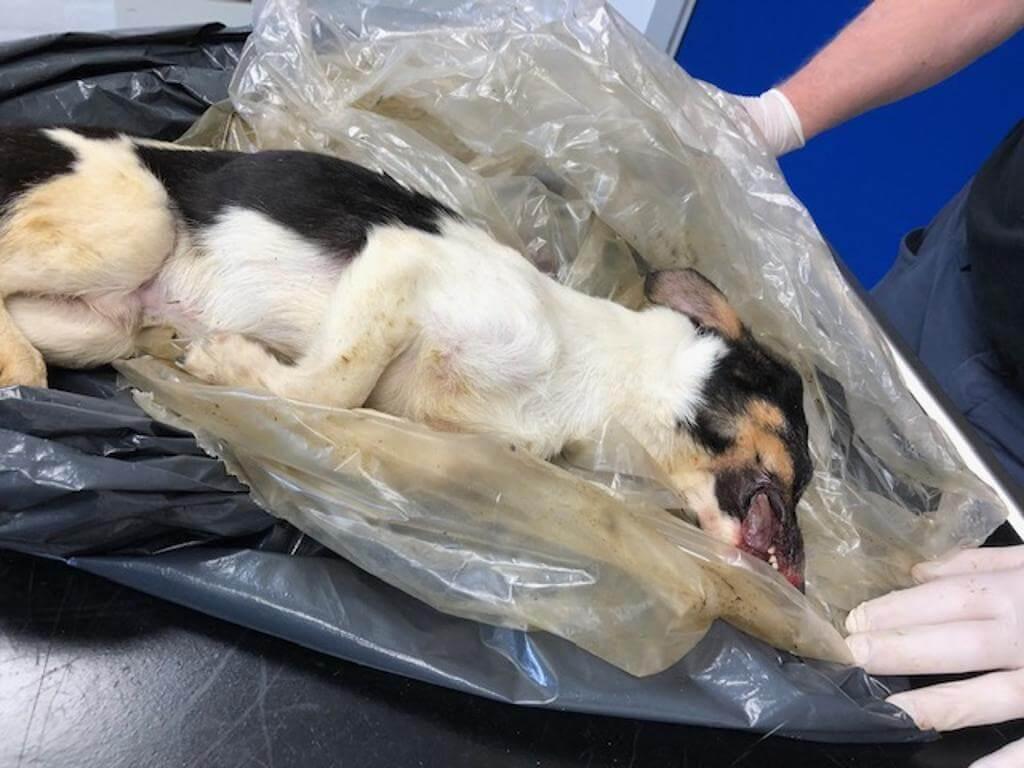 PRESSEMEDDELELSE: Grov vanrøgt – mindst én hund sultet ihjel
