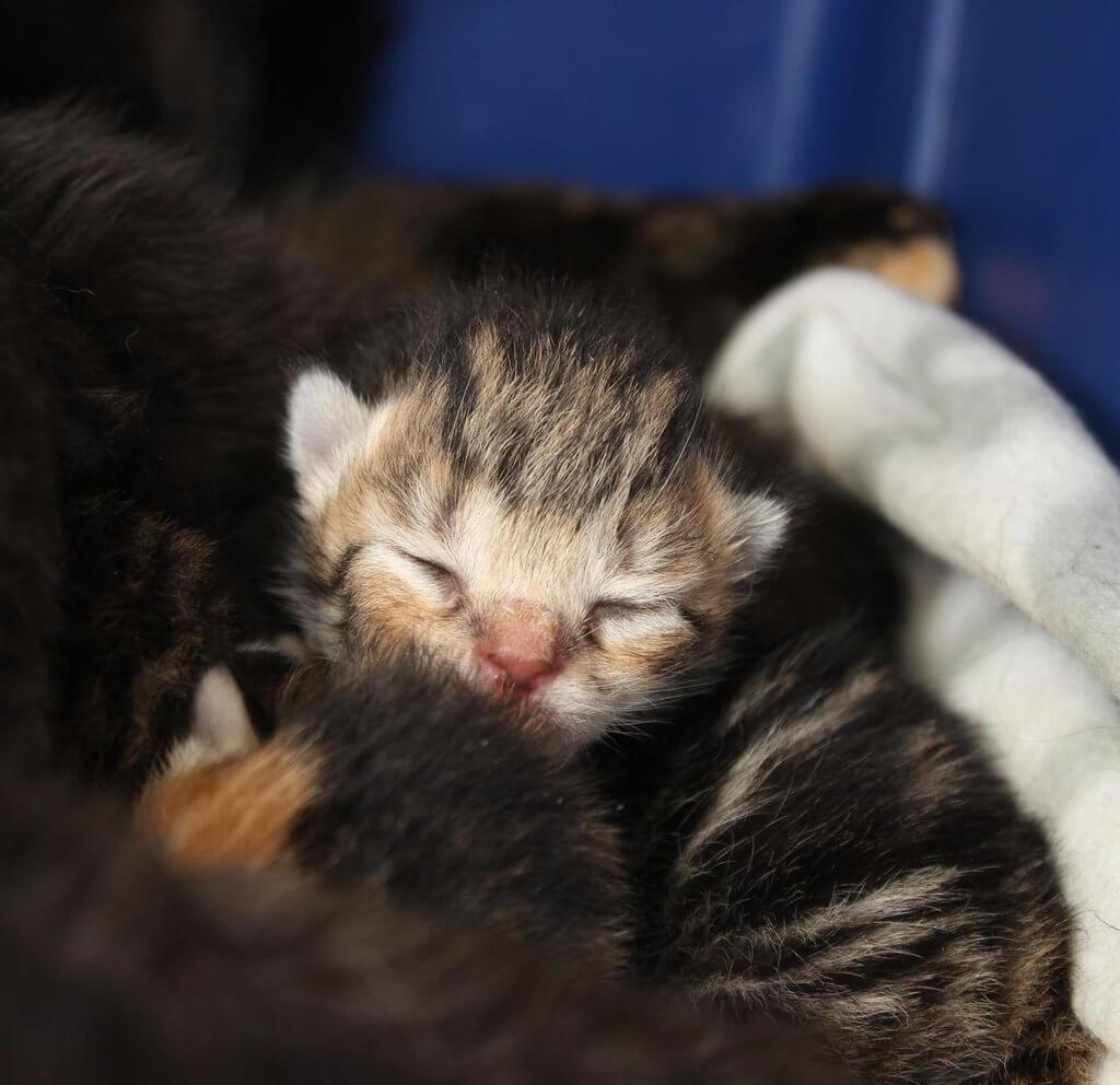 PRESSEMEDDELELSE - Trist udvikling, katte dumpes i stor stil (2)