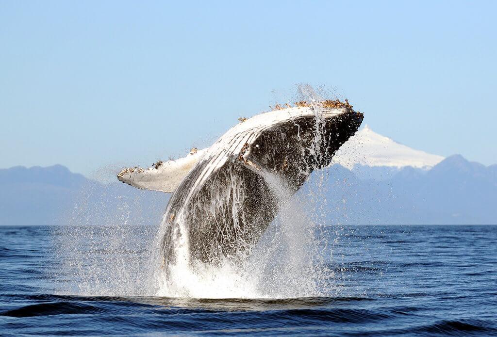 PRESSEMEDDELELSE: Livet i havene kan genopbygges på 30 år, hvis vi tager os sammen