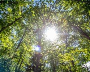 PRESSEMEDDELELSE: 100 procent bæredygtigt træ i JYSK