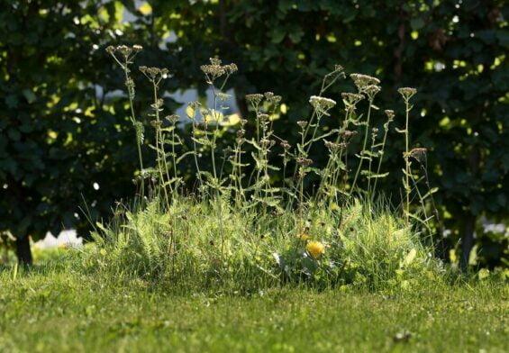 PRESSEMEDDELELSE – Danske haveejere er blevet dus med den vilde natur