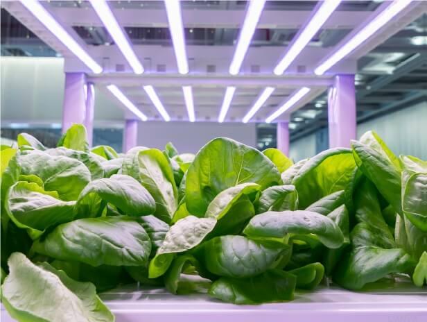 PRESSEMEDDELELSE – Fremtidens fødevarer dyrkes på hylder i en container på Amager