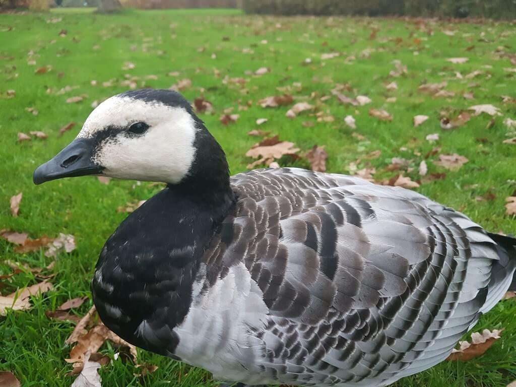PRESSEMEDDELELSE – Stort dødsfald blandt vilde fugle i Sønderjylland