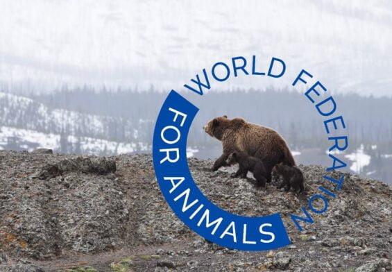 PRESSEMEDDELELSE – Ny verdensomspændende dyrevelfærdsorganisation ser dagens lys
