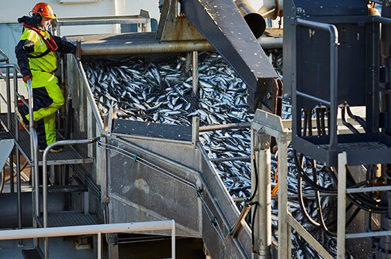 PRESSEMEDDELELSE – Fiskere, forskere og Dyrenes Beskyttelse undersøger for første gang dyrevelfærd i fiskeriet